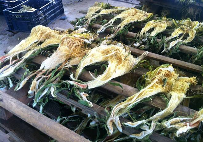 Hot Sale Dried Dragon Flowers From Viet Nam
