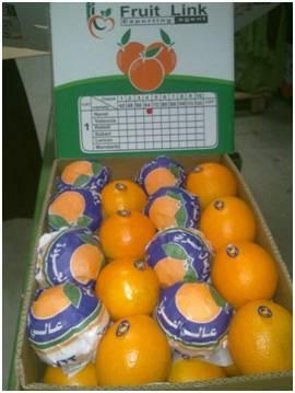 egyptian fresh navel by fruit link