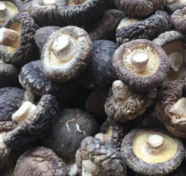 Dried mushroom fungus Shiitake Mushroom