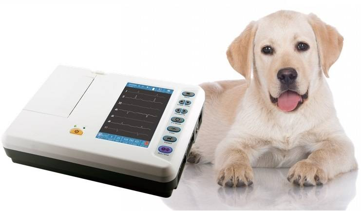 6 channel Veterinary ECG machine