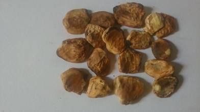 Bhilawa Seed (Godambi)