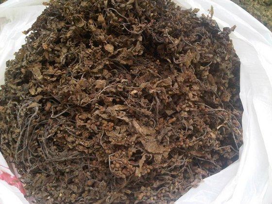 Dried SARGASSUM Seaweed