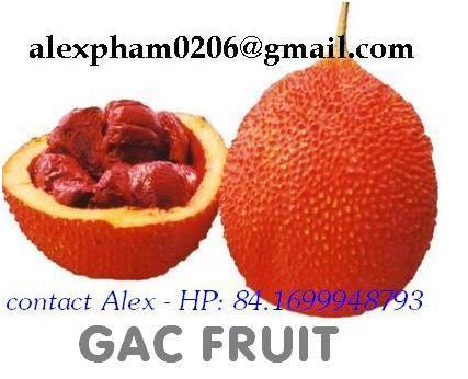 GAC FRUIT / MOMORDICA FRUIT/ FROZEN GAC PUREE/ DRY GAC POWDER/ GAC OIL in alexpham0206ATgmai