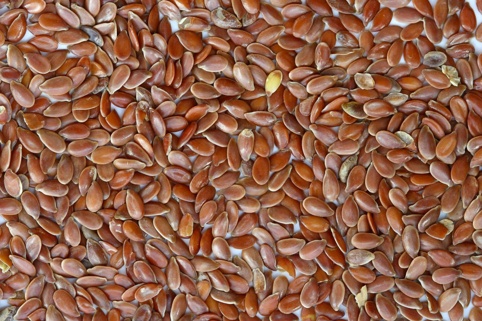 Flax seeds from Russia