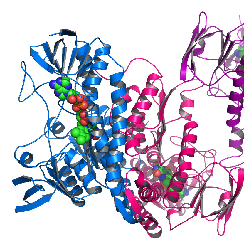 Recombinant Human Growth Hormone (rHGH)