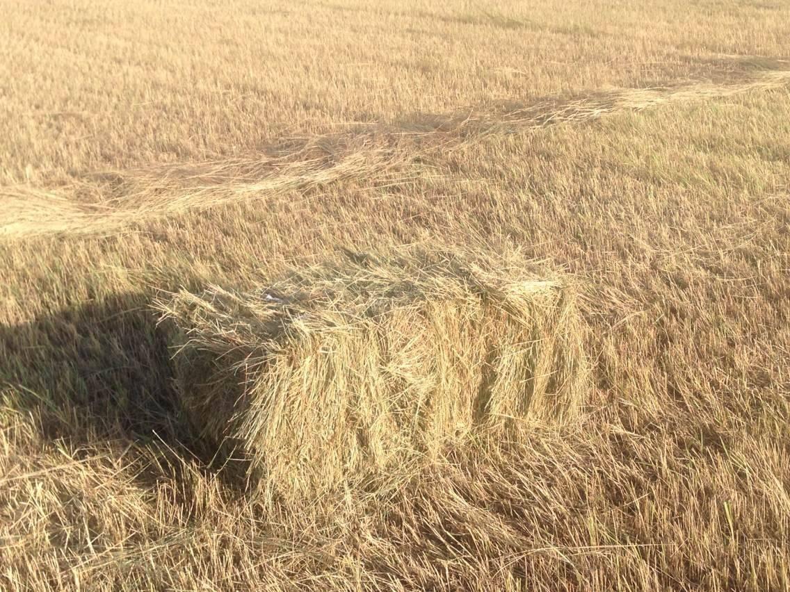 China best quality animal feed  corn straw