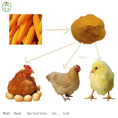 corn gluten meal,high protein