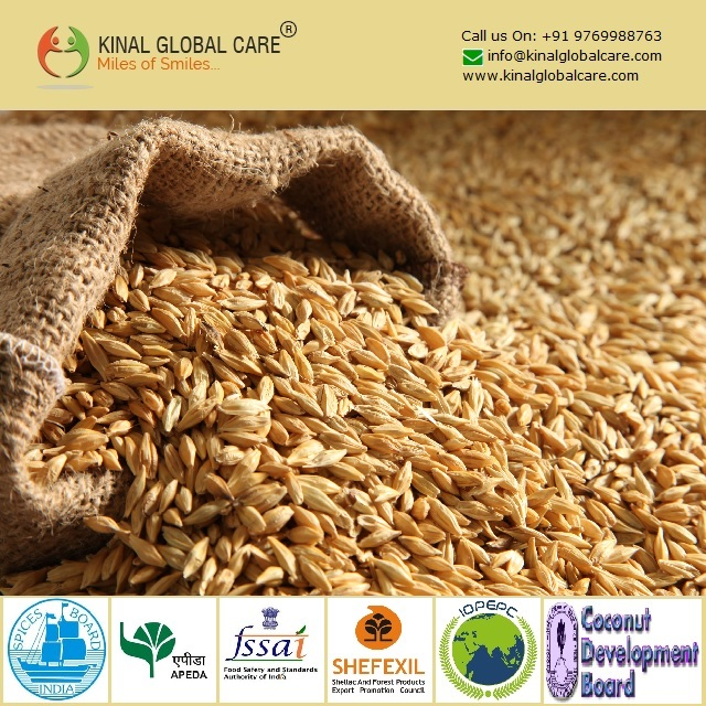 Best Grade Barley Seeds From India