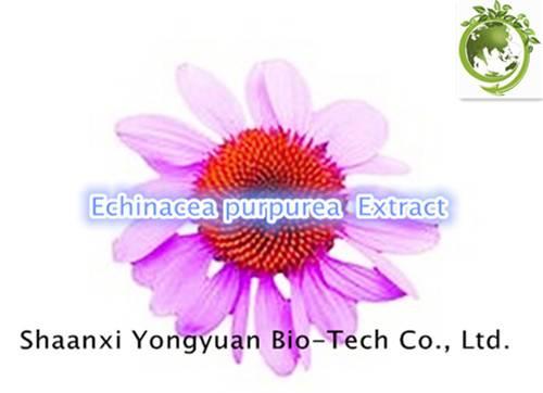 Echinacea purpurea P.E. Phenolics 4.0%UV/HPLC;