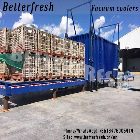 Manufacture provide 12 pallets Vegetable Vacuum Cooling machine with Vertical sliding door