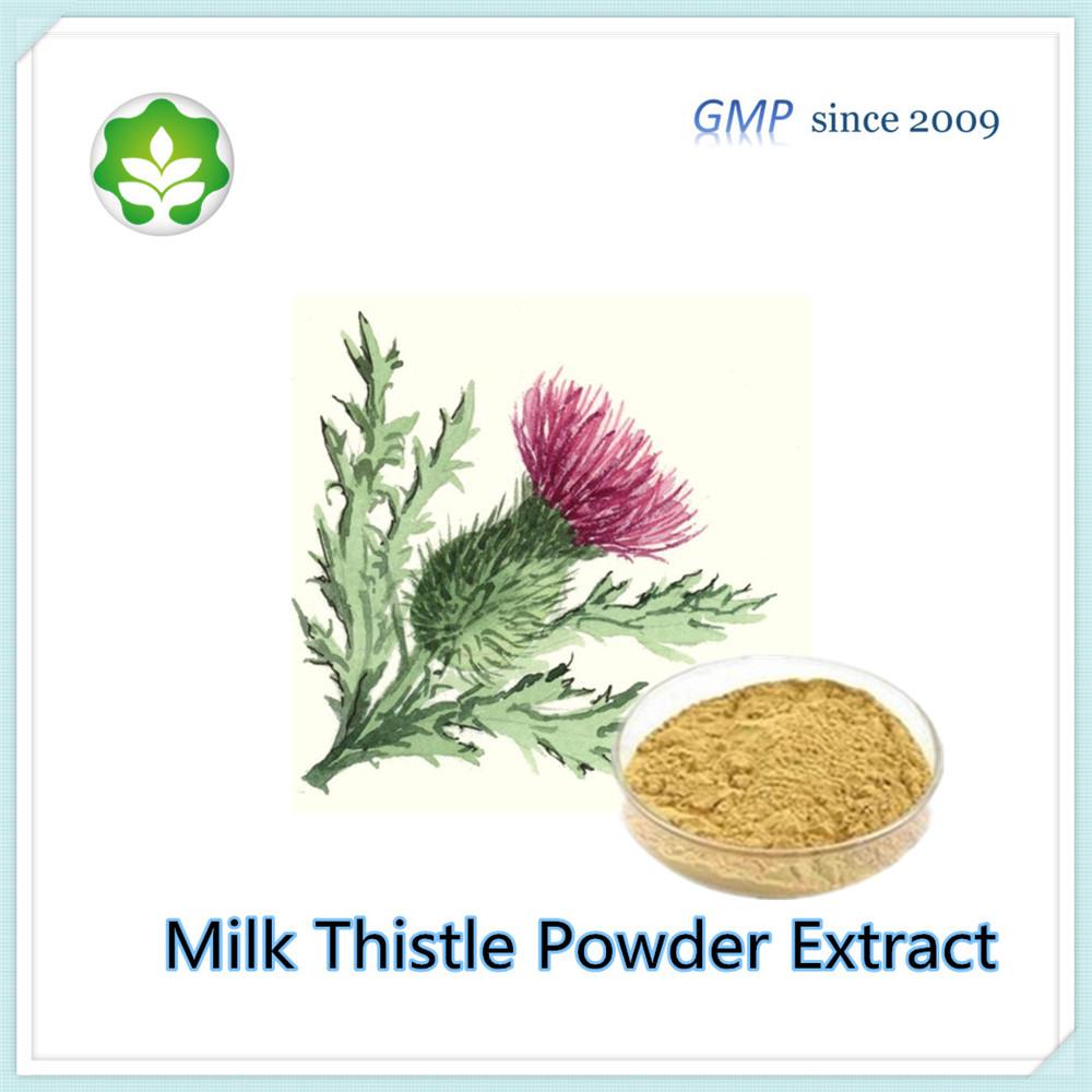 milk thistle plant herbal extract silymarin 61-63%
