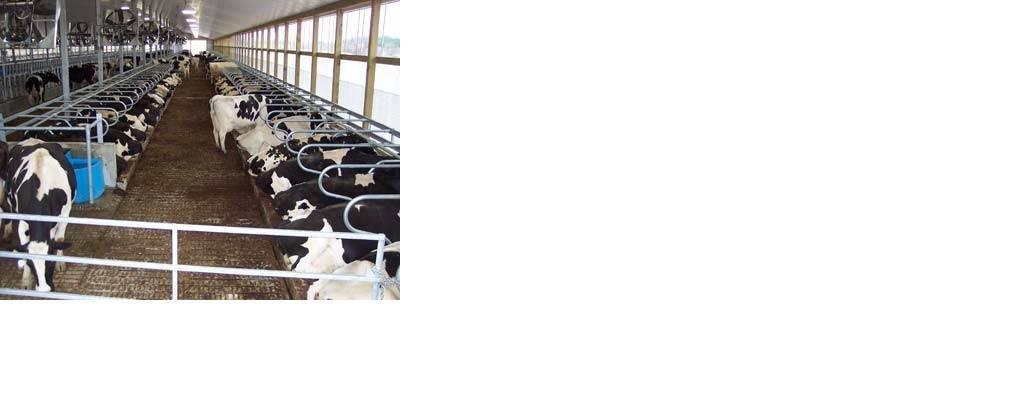 Setting up Organized Dairy Farm