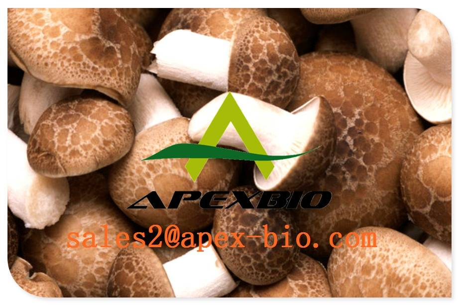 supply best quality Shiitake Mushroom Extract