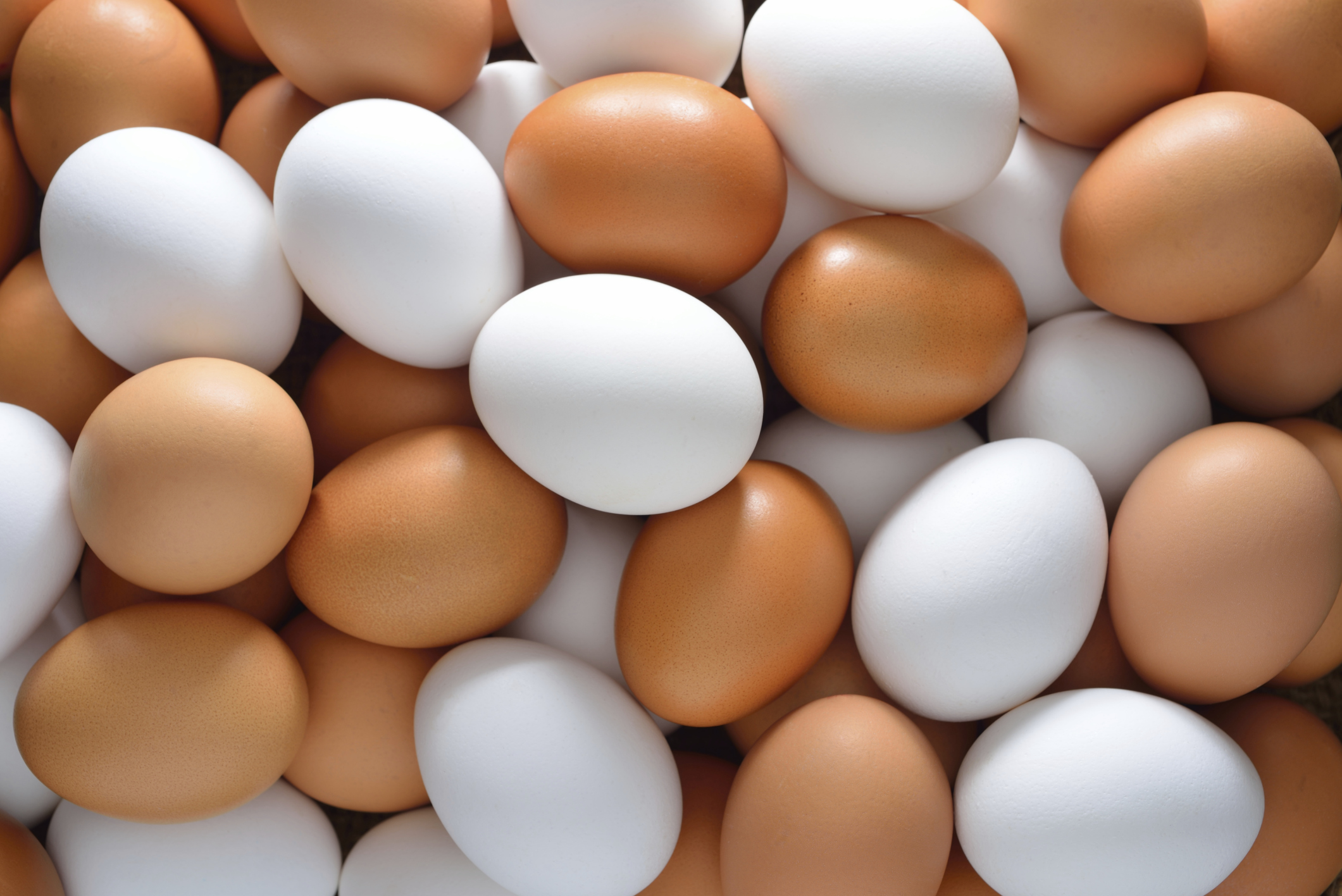 White and Brown Chicken Eggs, Fresh Table Eggs,Parrot eggs