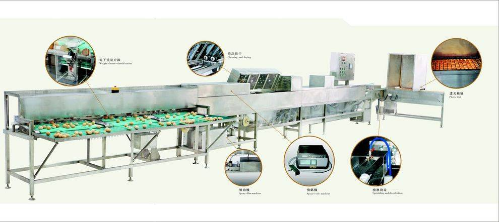 MT-100-2 full automatic cleaning and grading machine for egg products