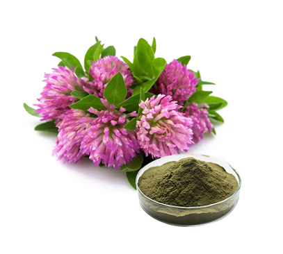Factory supply high quality Red Clover Extract