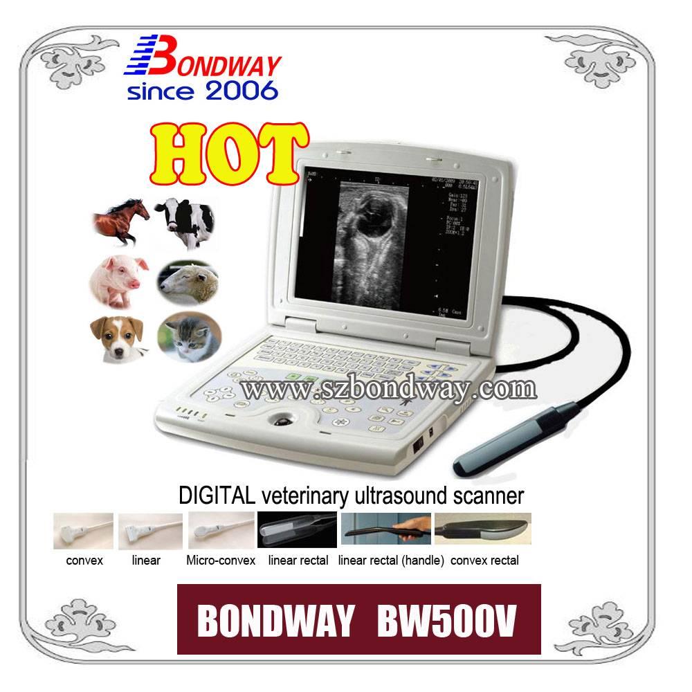 Digital Laptop Veterinary Ultrasound Scanner (BW500V)