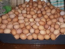 Fresh Chicken Table Brown and White Eggs