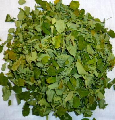 Moringa oliefera dried leaf
