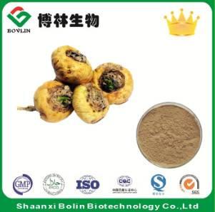 Maca Root Extract Natural Maca Root Powder