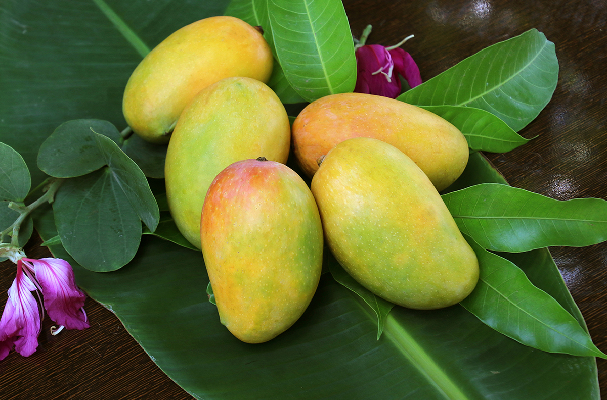 Best Quality Tropical Fruits From Vietnam - Organic Fruit Fresh Sweet Mango