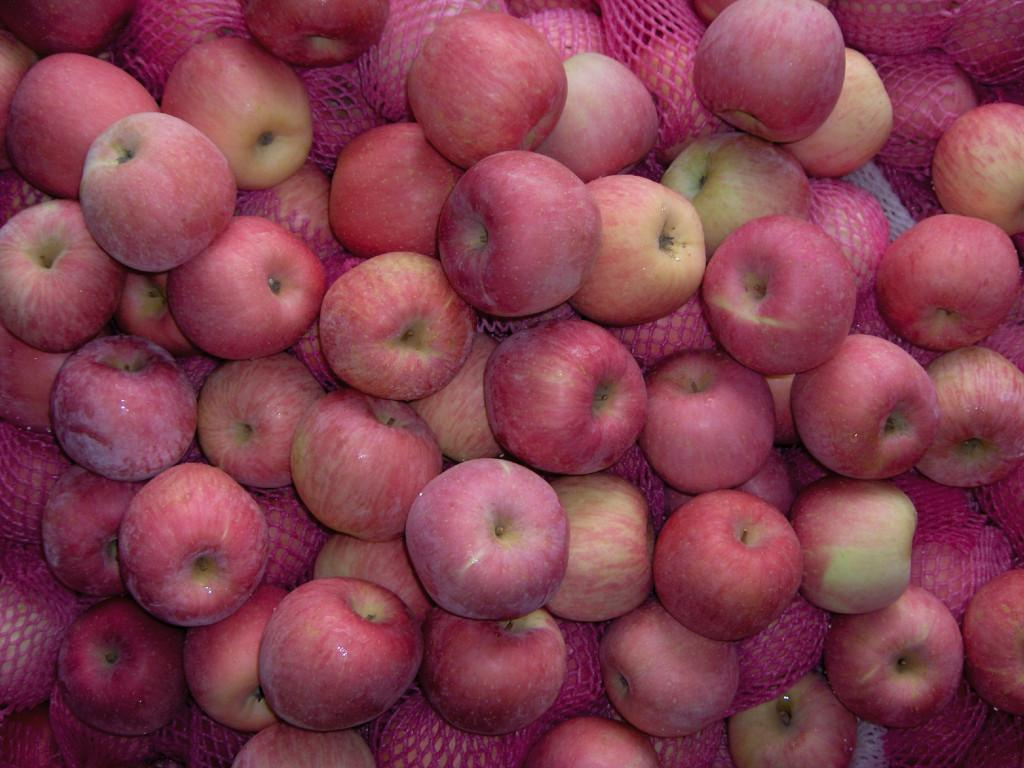 2017 New Fresh Fuji Apple for afforable prices
