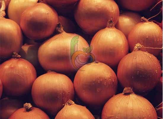 Egyptian yellow onion by fruit link