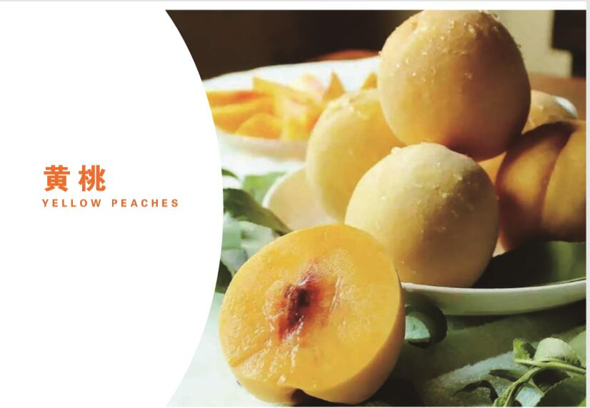 The Chinese yellow peaches supplier and fresh peaches