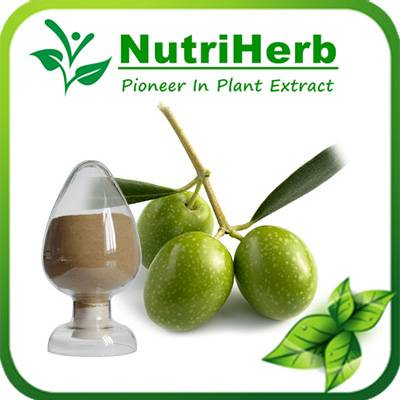 Natural Olive Leaf Extract 10%-50% Oleuropein /Hydroxytyrosol