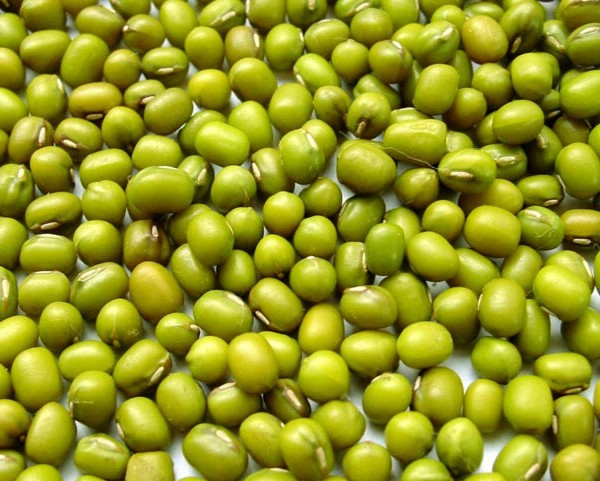 Best Quality Vigna Beans, Beans at very good prices