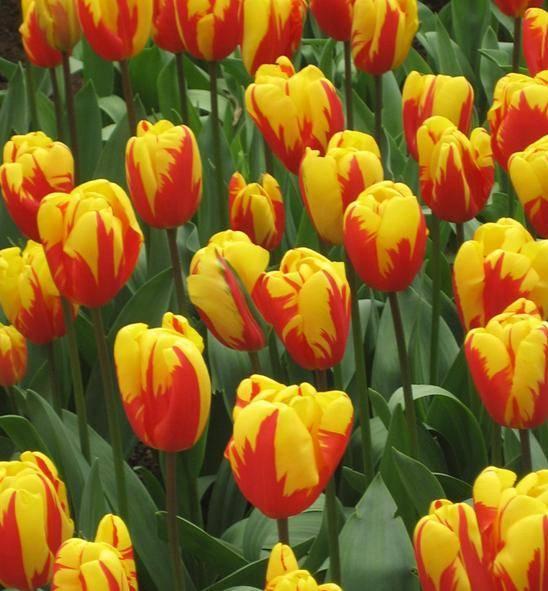 flower soid