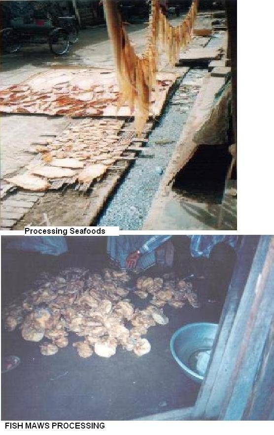 Dried Fish Maws & Seafoods