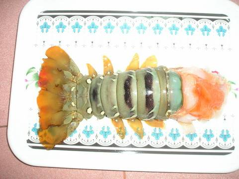 FROZEN SPINY LOBSTER & TAILS FROM VIETNAM