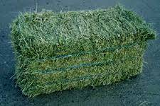 Alfalfa, Oats, Rhodes Grass Hay