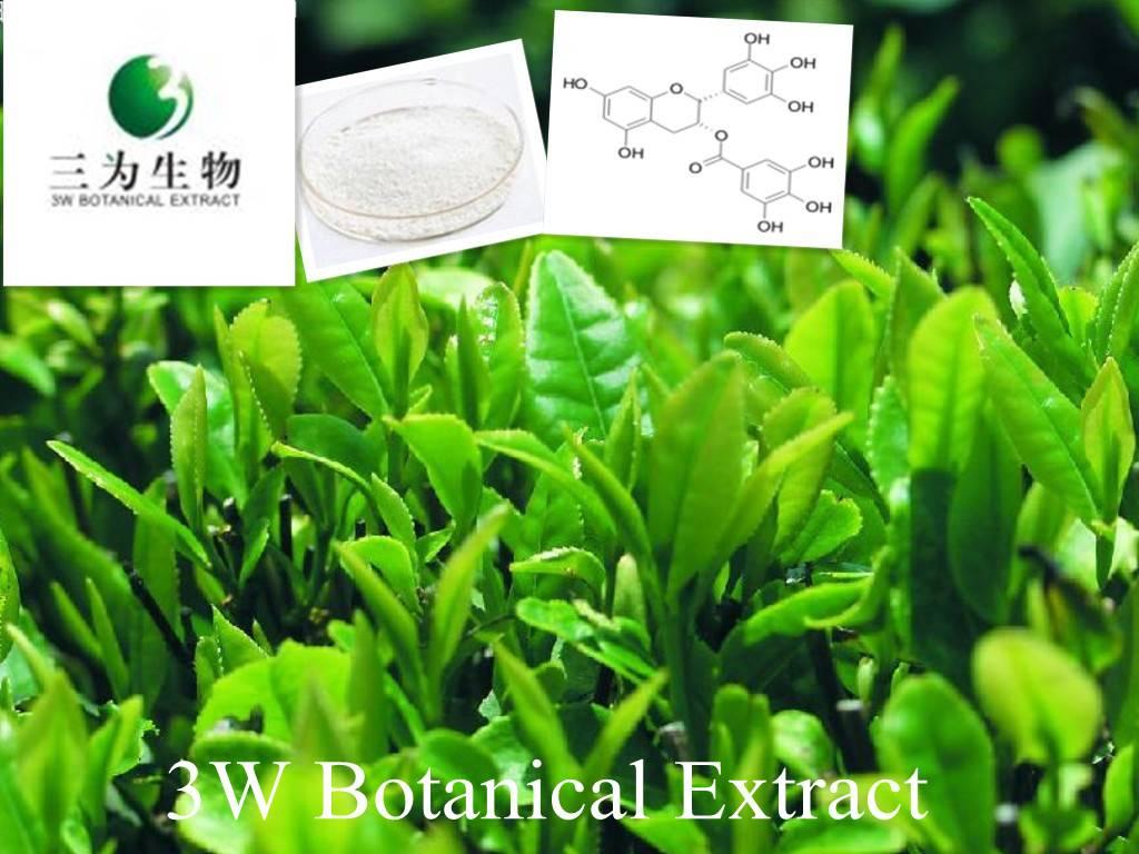 Green Tea Extract(sales05@3wbio.com)