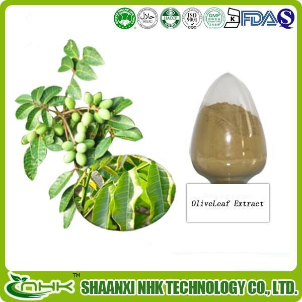 Organic olive leaf extract / olive leaf extract powder / olive leaf powder extract