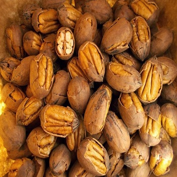 Pecan Nut Roasted Salted Pecans/Raw Pecan Nuts With Shell for sale