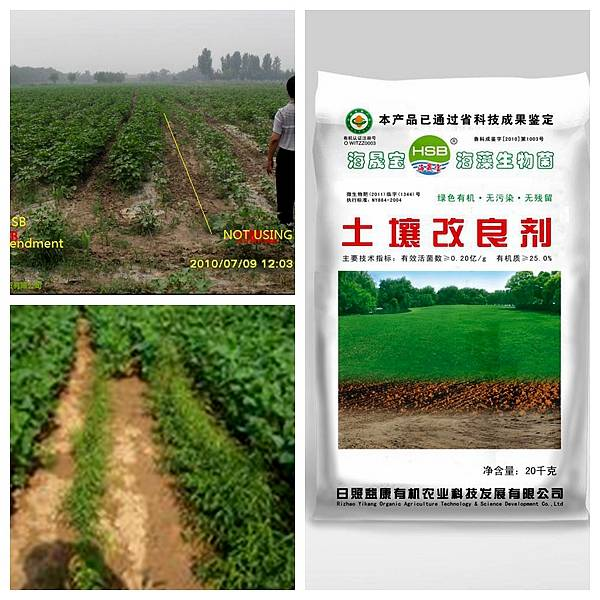 Soil Amendment for both saline alkali soil and acid soil
