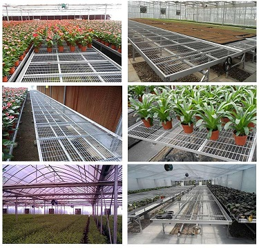 Hebei prenda greenhouse movable benches equipment factory