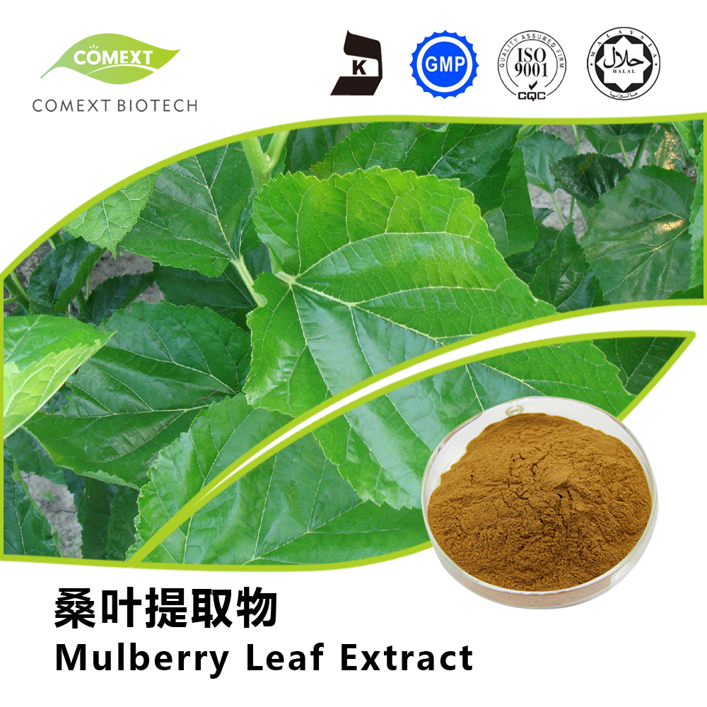 Mulberry Leaf Extract 1-DNJ 1%~5% Powder