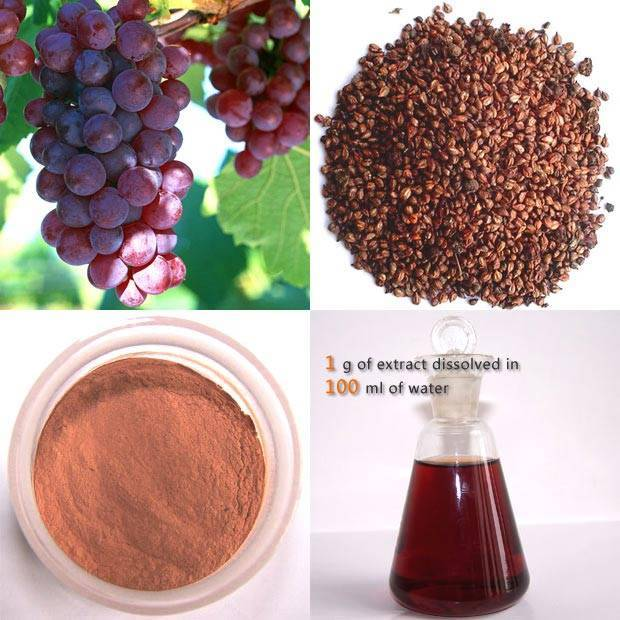 Grape Seed Extract OPC 95%UV