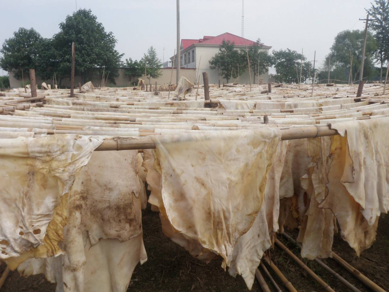 dried cow lime splits for rambak crackers Kerupuk Kulit Sapi