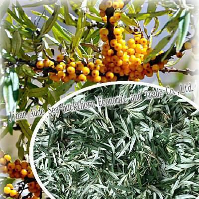 Sea buckthorn dry leaves (sea buckthorn tea)
