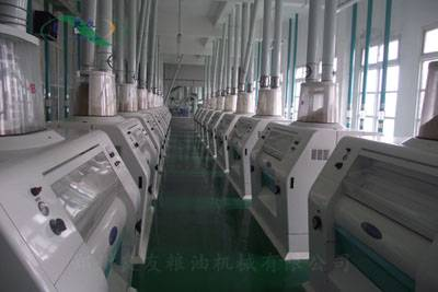300T/24H Floor type wheat flour production line