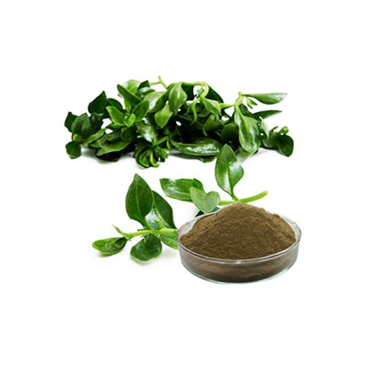 High Purity andrographis paniculata,Herb Andrographis Extract andrographolide 98% HPLC Pharmaceutica