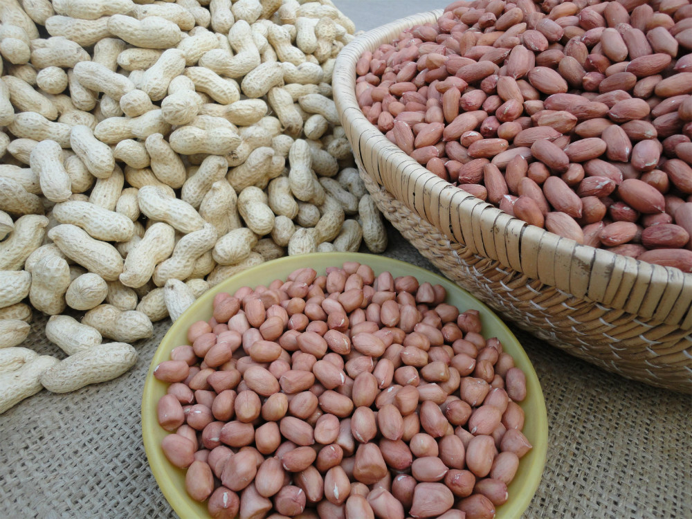 High Quality Raw Peanuts Kernel / Raw Peanut in Shell for sale