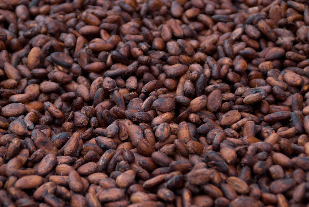 Quality Grade Raw Sun Dried Cocoa Beans And Coffee Beans