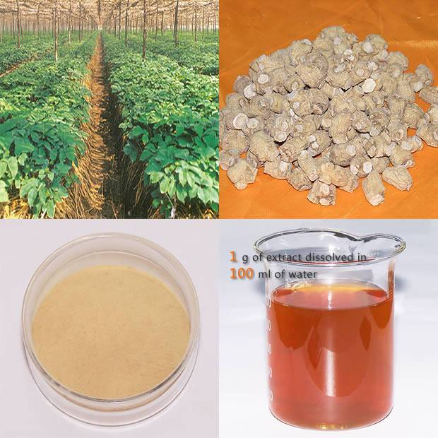 Low Pesticide American Ginseng Root Extract 10%HPLC
