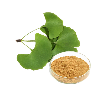 Ginkgo Biloba Leaves Extract