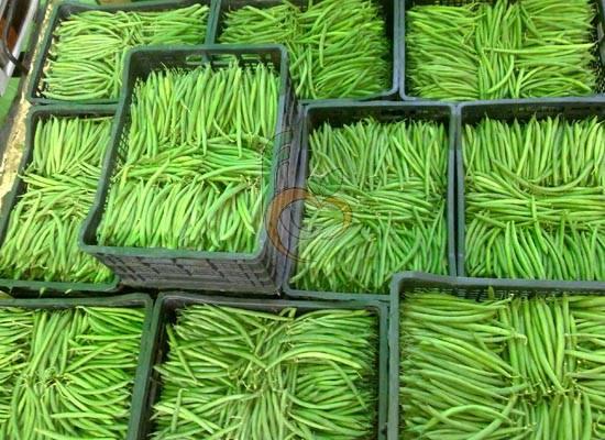Fresh Egyptian Green Beans by Fruit Link